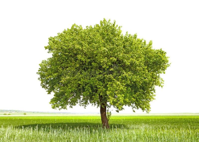 Groene boom - symbool van een Groene Aarde stock fotografie