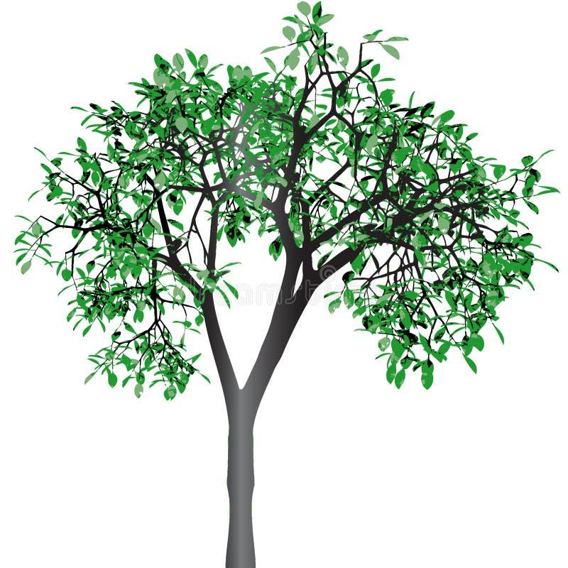 Groene boom. Vector. stock illustratie