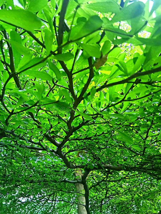 Groene boomachtergrond stock afbeelding