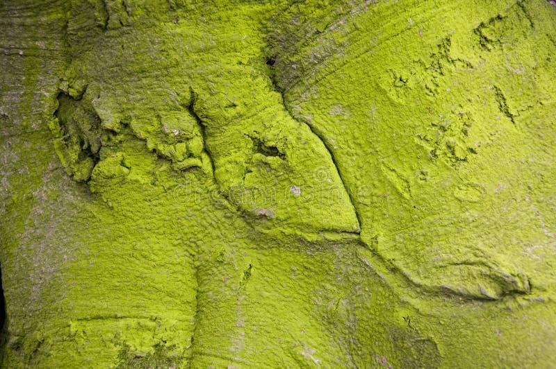 Groene boomschors stock foto's