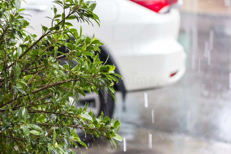 Groene boomstruik tijdens het regenen en onduidelijk beeldautoachtergrond bij parkeerterrein stock afbeeldingen