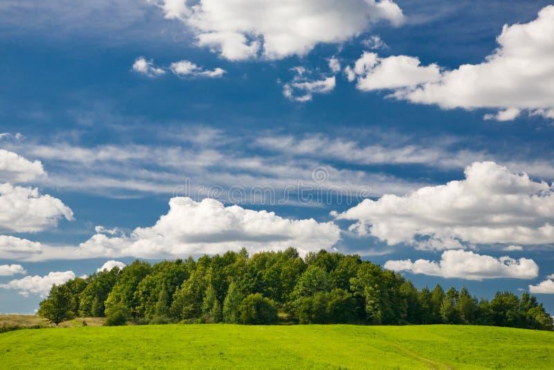 Groene bos en blauwe hemel royalty-vrije stock fotografie