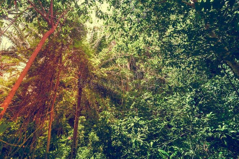 Download Groene bosachtergrond stock foto. Afbeelding bestaande uit nave - 54087226
