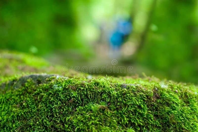 Groene, bosachtergrond met nadruk op mos royalty-vrije stock foto's