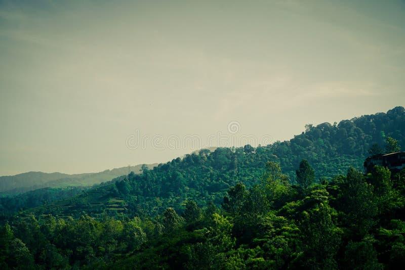 Groene bosberg met bewolkte hemel en mist op tropisch gebied royalty-vrije stock afbeelding