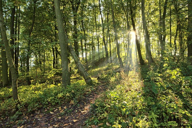 Groene bosbomen royalty-vrije stock afbeelding