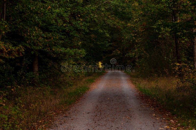 Groene bosbomen met landweg stock foto's