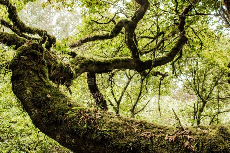 Groene bossen van Madera Tropisch bos in de bergen op het eiland van Madera royalty-vrije stock fotografie