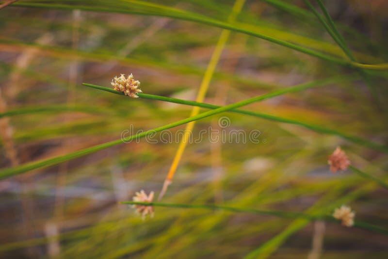 Groene, bruine aard; gentl het weiland van het ontspanningsgras royalty-vrije stock afbeelding