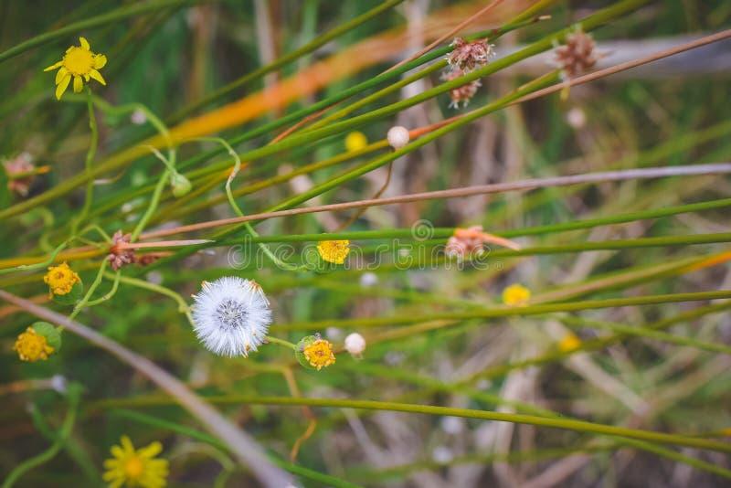 Groene, bruine aard; gentl het weiland van het ontspanningsgras stock afbeeldingen