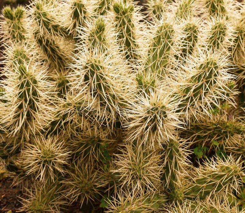 Groene cactus in de lente op het eiland van Madera royalty-vrije stock foto