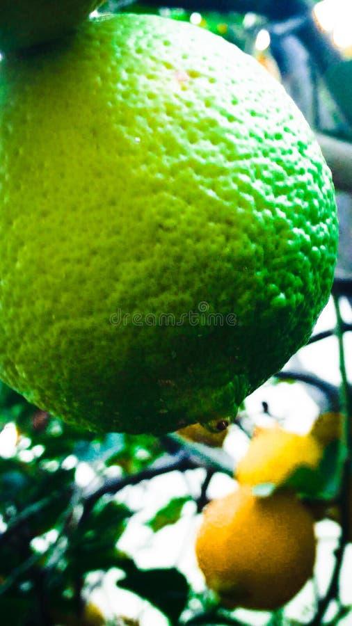 Groene citroen royalty-vrije stock afbeeldingen