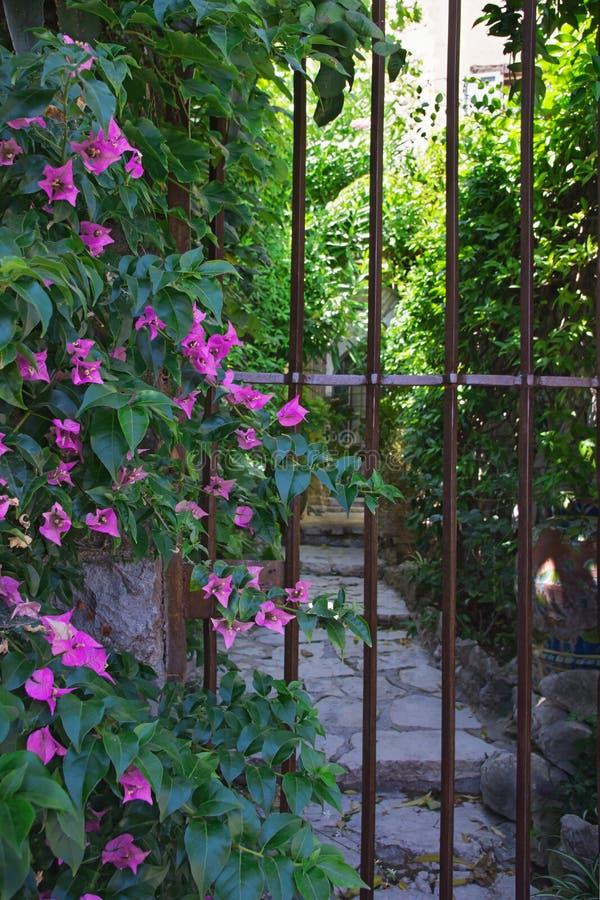 Groene comfortabele binnenplaatsen van het Franse dorp van San Paul de Vence royalty-vrije stock foto's