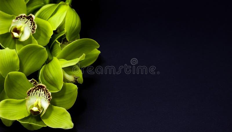 Groene Cymbidium-Orchidee op een zwarte achtergrond stock fotografie