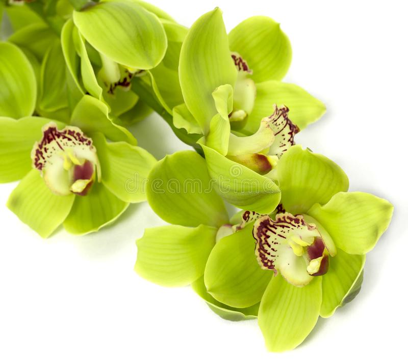 Groene Cymbidium-Orchidee op witte achtergrond royalty-vrije stock foto's