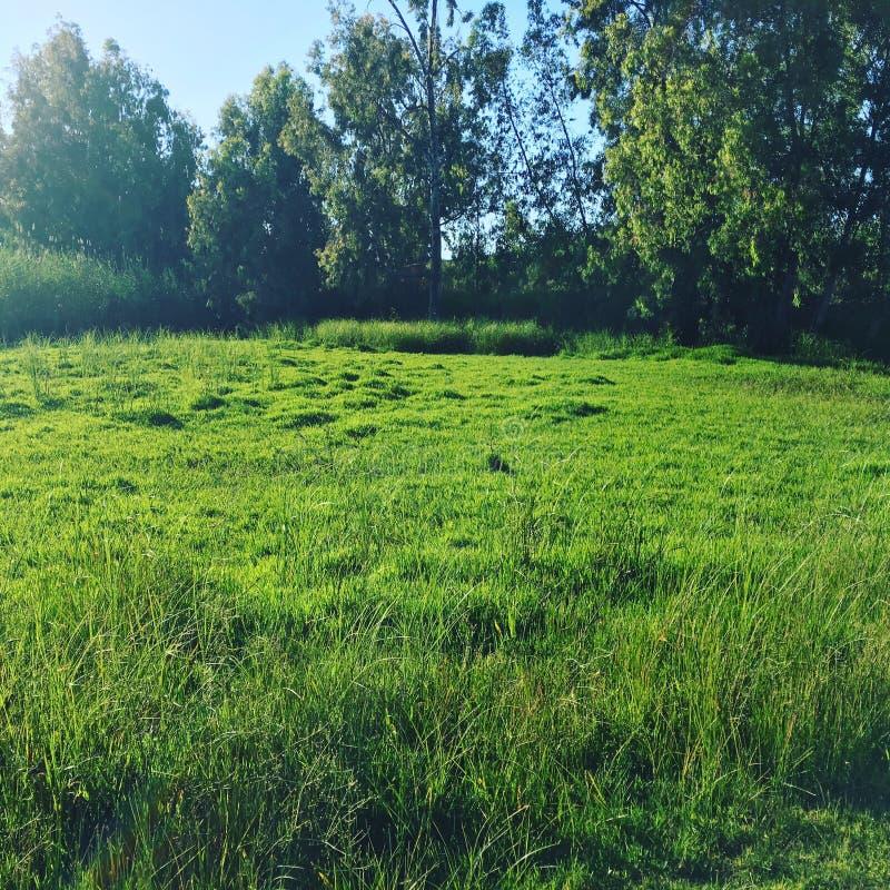 Groene dag stock foto's