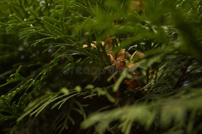 Groene de bladerenbomen van de Kleurenzomer stock afbeeldingen