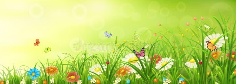 Groene de lente of de zomerweide stock fotografie