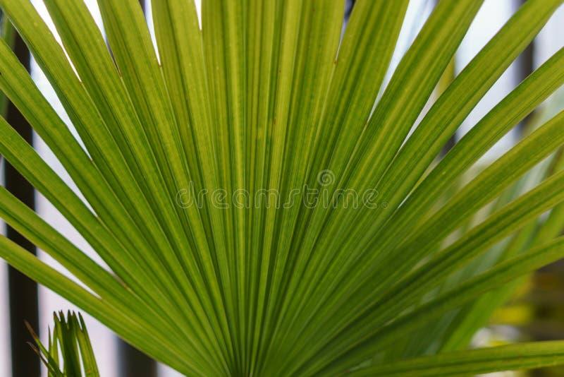 Groene de palmvoorzijde van Nice royalty-vrije stock afbeelding
