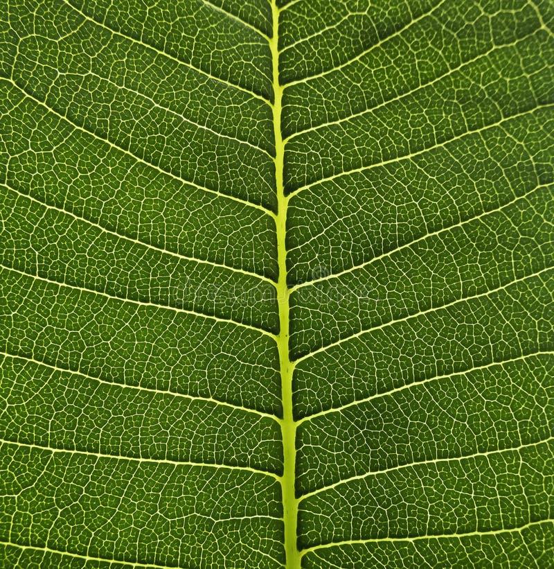 Groene de structuurachtergrond van de Bladcel, de textuur van het Aardontwerp op groen gebladerte - macroschot, textuur stock foto