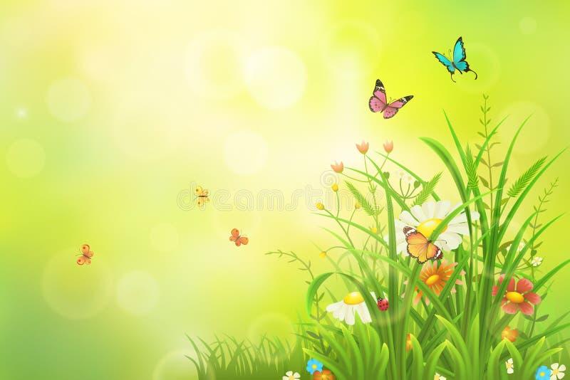 Groene de zomerachtergrond stock foto's