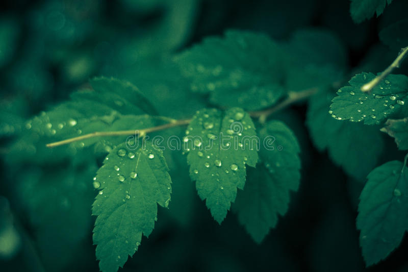 Groene de zomerochtend stock afbeelding