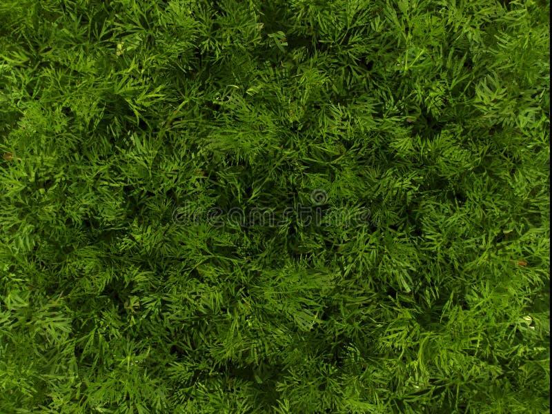 Groene die achtergrond op foto's van de lentegras wordt gebaseerd stock foto