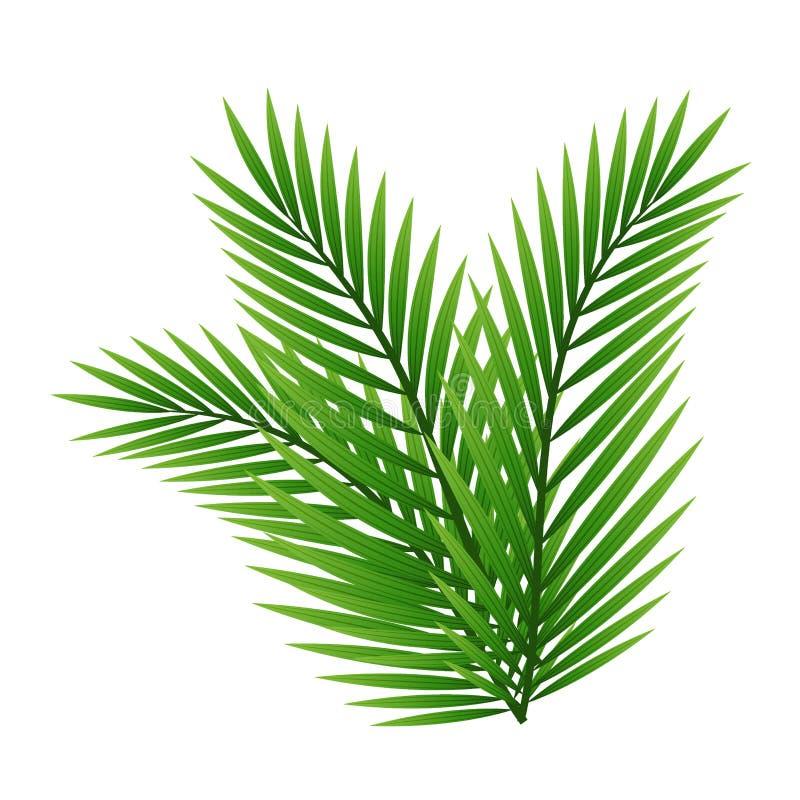 Groene die bladeren van palm op witte achtergrond wordt geïsoleerd royalty-vrije illustratie