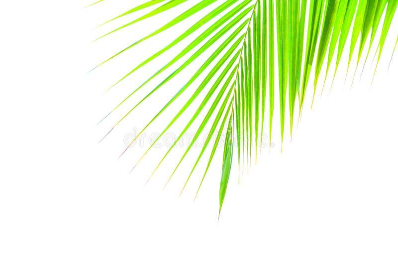 Groene die bladeren van palm op witte achtergrond wordt ge?soleerd royalty-vrije stock fotografie