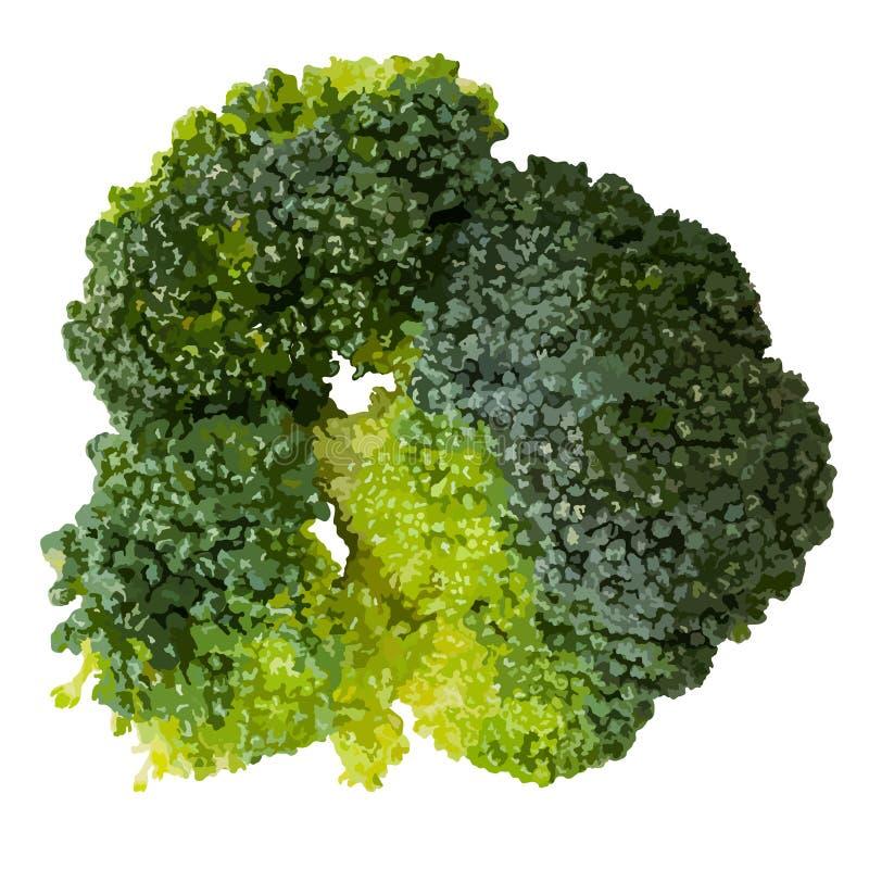 Groene die broccoli op witte hoogste menings vectorillustratie worden geïsoleerd vector illustratie