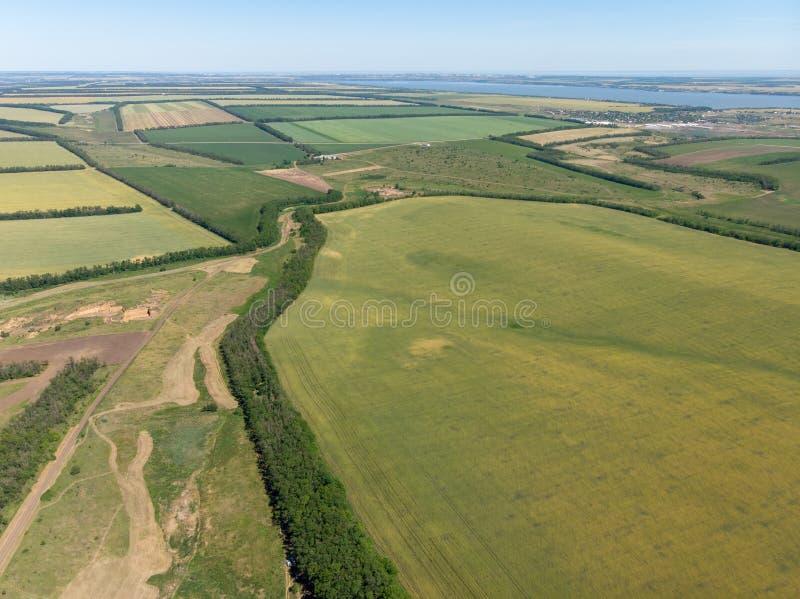 Groene die gebieden met tarwe worden gezaaid Hoogste luchtdiemening door hommel wordt gemaakt stock foto
