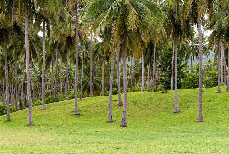 Groene die heuvel met gras kort met jong tropisch het landschapsdeel van bomenpalmen wordt behandeld van golfcursus stock fotografie