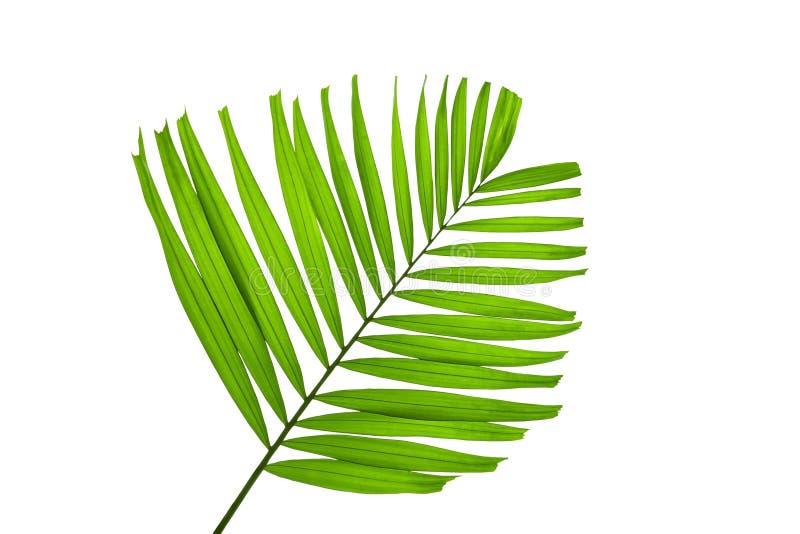 Groene die palmbladen op witte achtergrond, het knippen weg binnen worden geïsoleerd royalty-vrije stock foto's