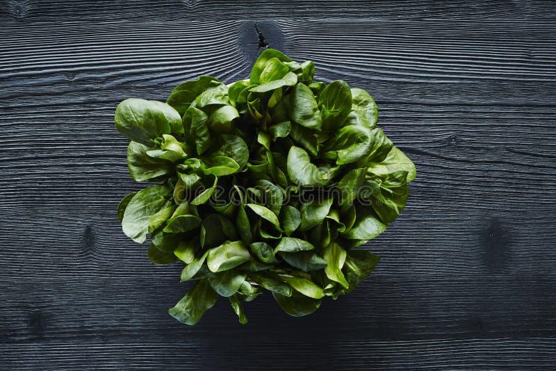 Groene die salade op donkere houten oppervlakte wordt gecentreerd royalty-vrije stock afbeeldingen