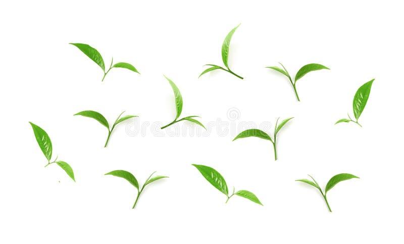 Groene die theebladinzameling op witte achtergrond wordt geïsoleerd stock fotografie