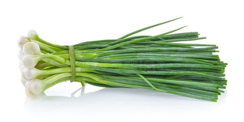 Groene die ui op witte achtergrond wordt geïsoleerd royalty-vrije stock foto