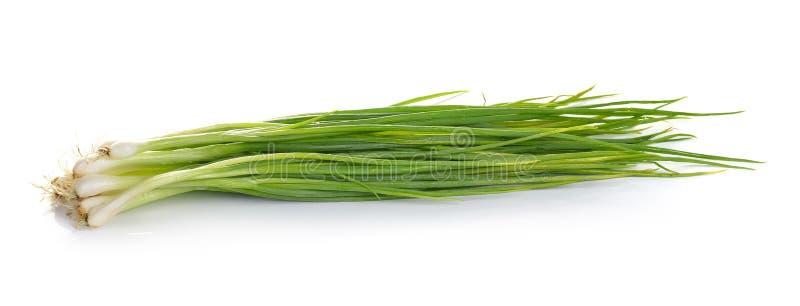 Groene die ui op witte achtergrond wordt geïsoleerd stock afbeeldingen