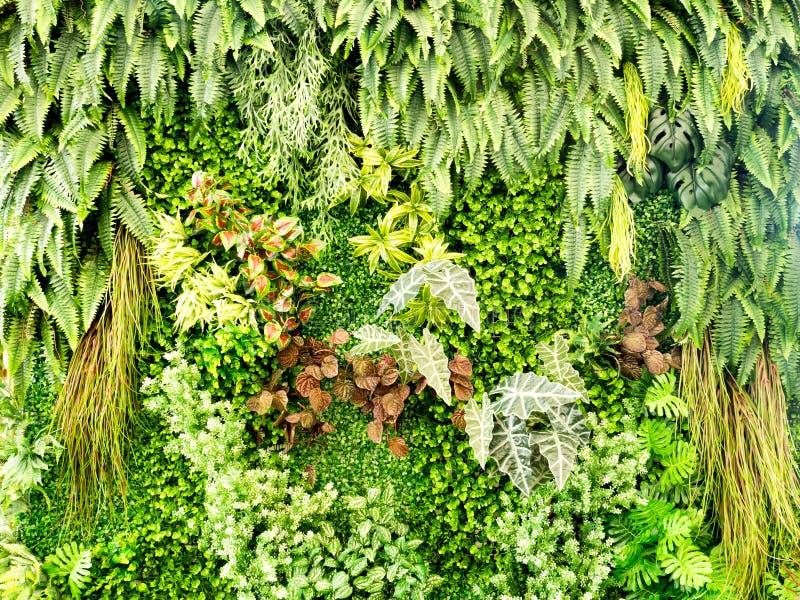 Groene diverse klimplantvaren en weelderige installatie op muur Aard en milieuconcept royalty-vrije stock foto's