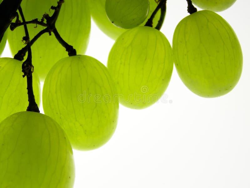 Groene druiven stock foto