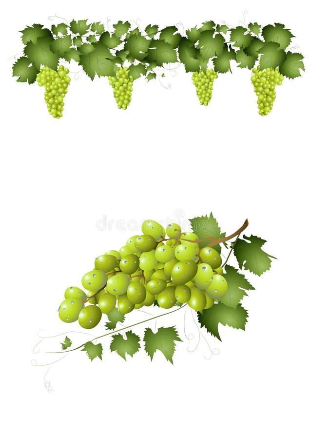 Download Groene druiven vector illustratie. Illustratie bestaande uit grafisch - 39111636