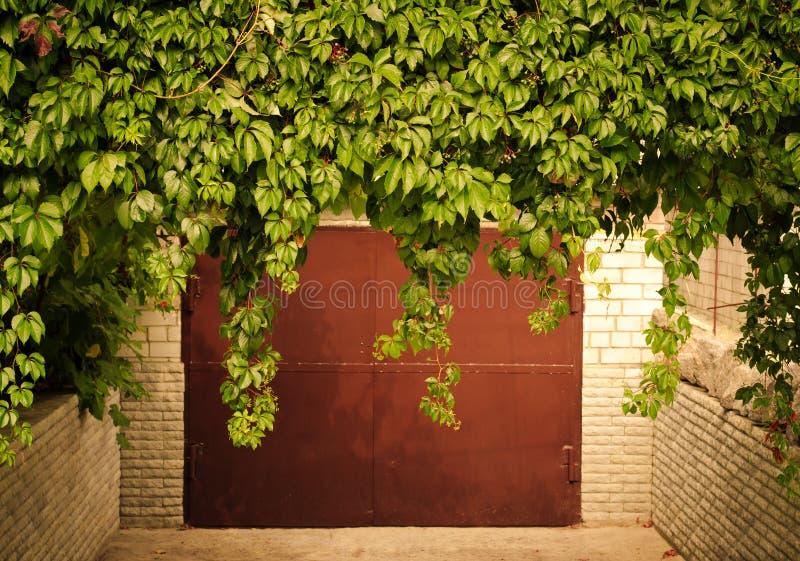 Groene druivenbladeren boven oude garagedeur als kader, uitstekende stijl royalty-vrije stock foto's