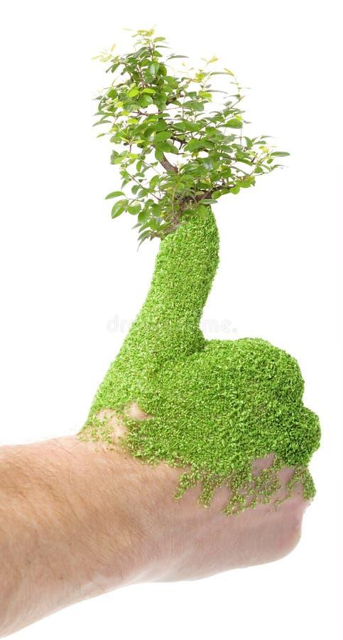 Groene duim royalty-vrije stock foto