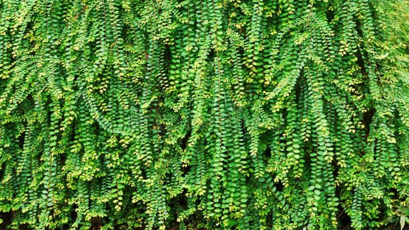 Groene Eco royalty-vrije stock foto's