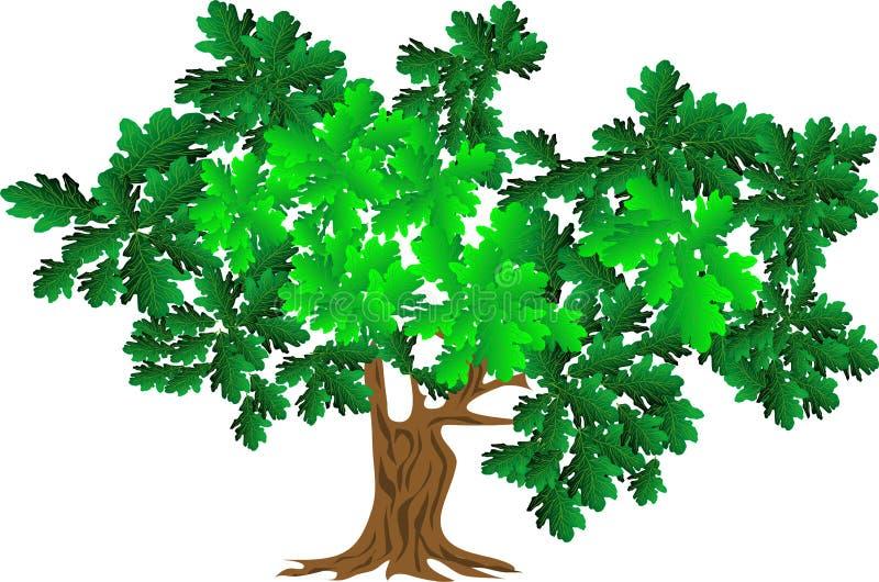 Groene eik stock illustratie
