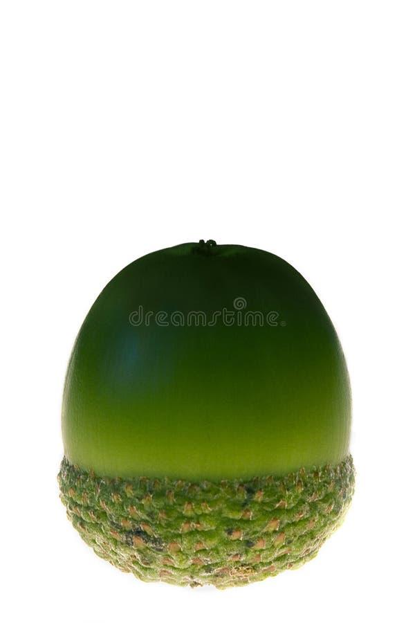 Groene eikel op witte achtergrond royalty-vrije stock afbeeldingen