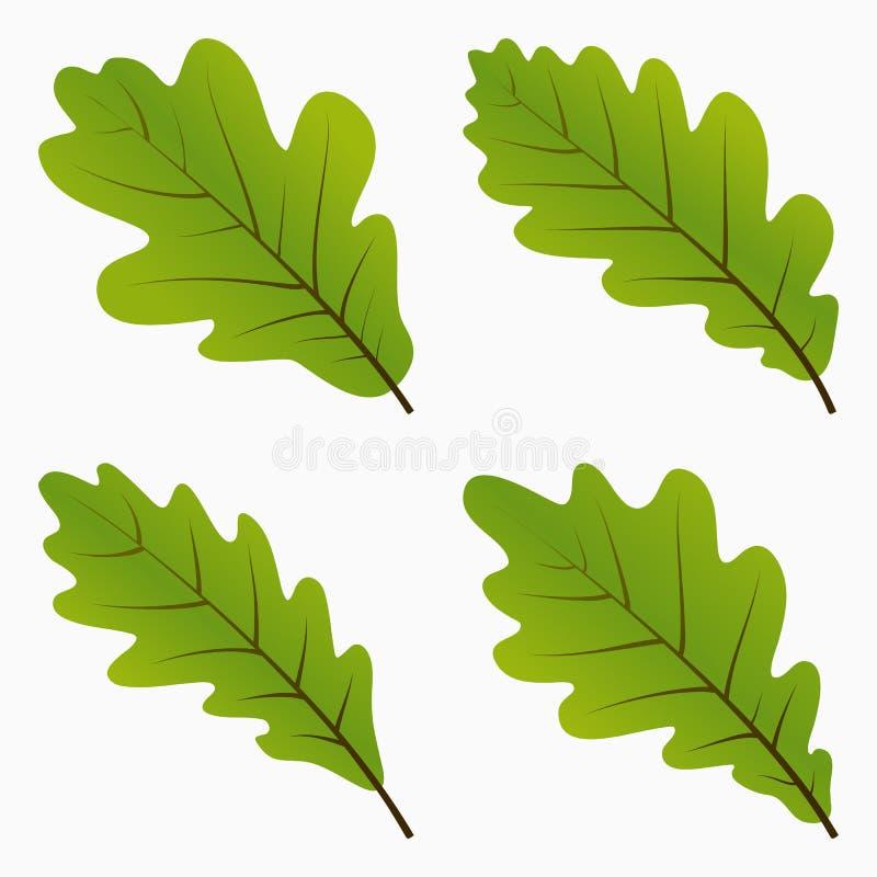 Groene Eiken Bladeren vector illustratie
