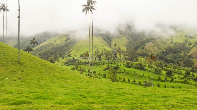 Groene en diepe vallei stock foto's