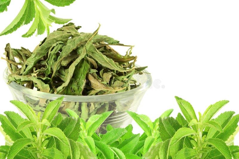 groene en droge Stevia-rebaudianabladeren op witte achtergrond stock afbeelding