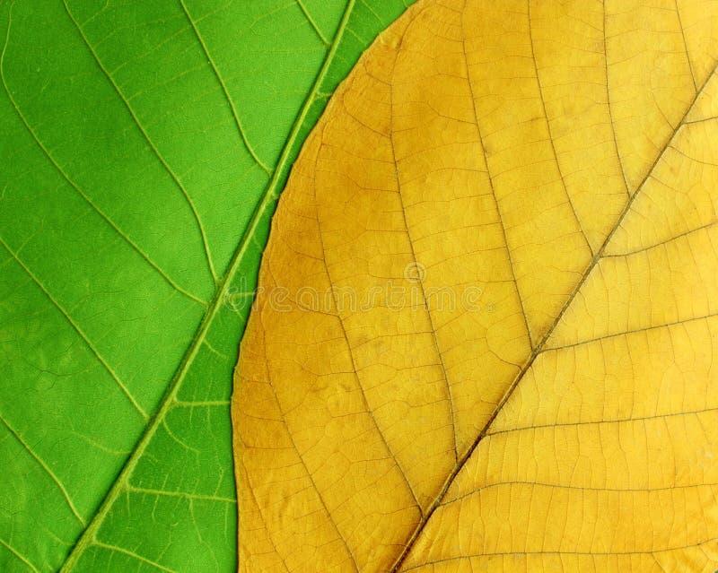 Groene en gele bladeren stock foto's