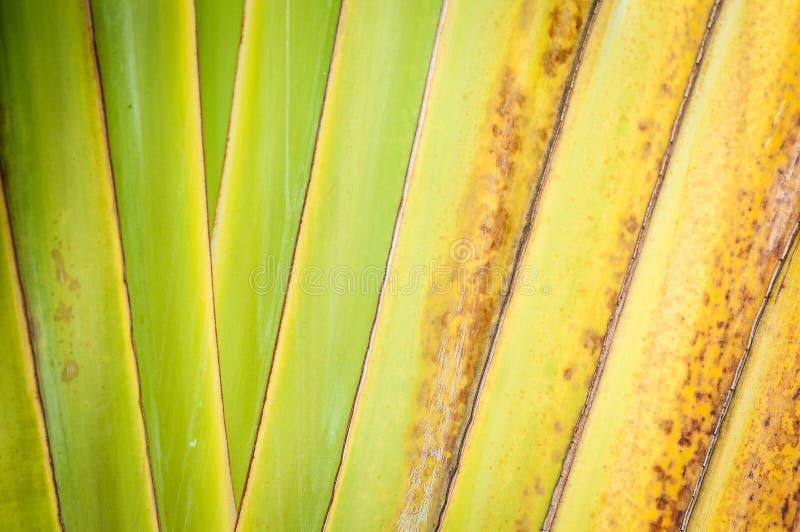 Sluit omhoog van droog palmblad als abstracte achtergrond. royalty-vrije stock afbeelding